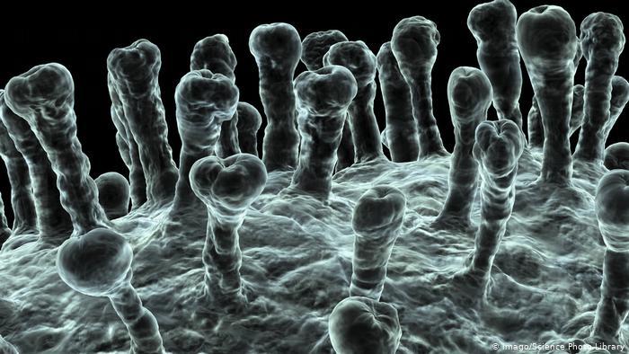 بیوتکنولوژی ، مادر واکسن های نوین