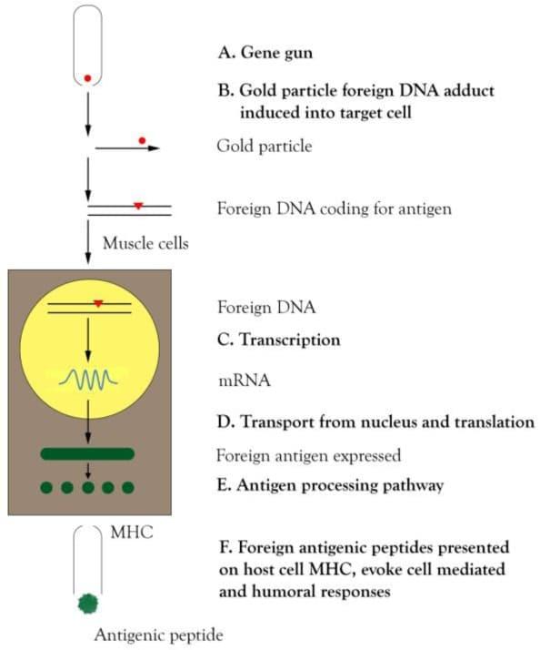 استارتاپ- DNA واکسن