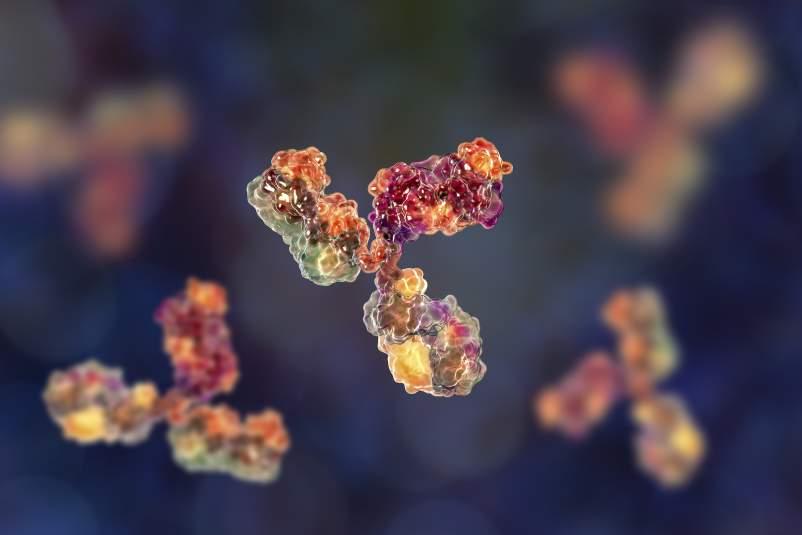 بیوتکنولوژی و برشی از پیتزای مونوکلونال آنتیبادیها