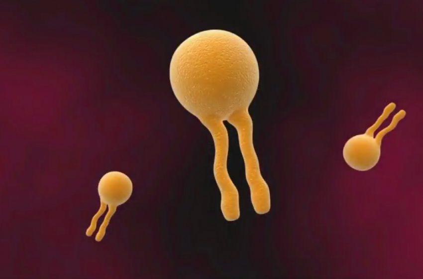 ویدیو | چالشهای تولید آمفوتریسین B مبتنی بر لیپوزوم