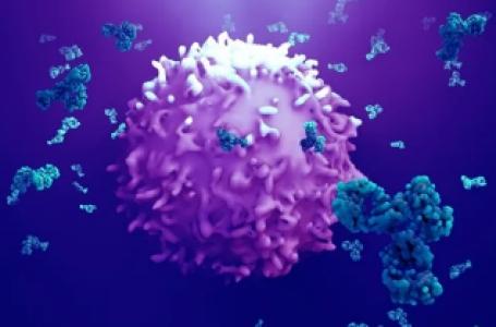 داروی مبتنی بر ADC و درمان سرطان