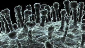 بیوتکنولوژی DNA واکسنها و استفاده از بیوتکنولوژی دارویی