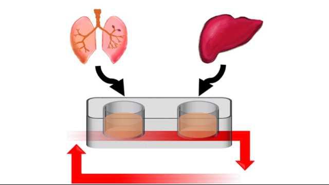انواع مدلهای اندام تراشه - 2